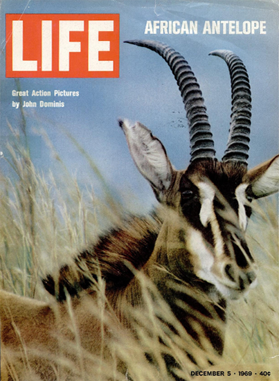 African Antelope by John Dominis 5 Dec 1969 Copyright Life Magazine   Life Magazine Color Photo Covers 1937-1970