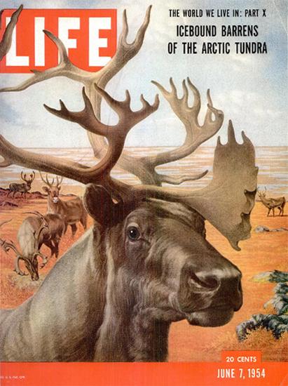 Arctic Tundra 7 Jun 1954 Copyright Life Magazine   Life Magazine Color Photo Covers 1937-1970