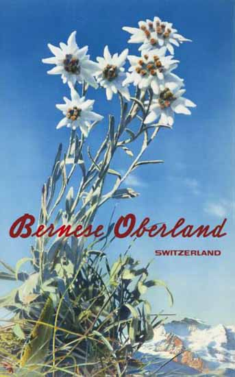 Bernese Oberland Edelweiss Switzerland 1940 | Vintage Travel Posters 1891-1970