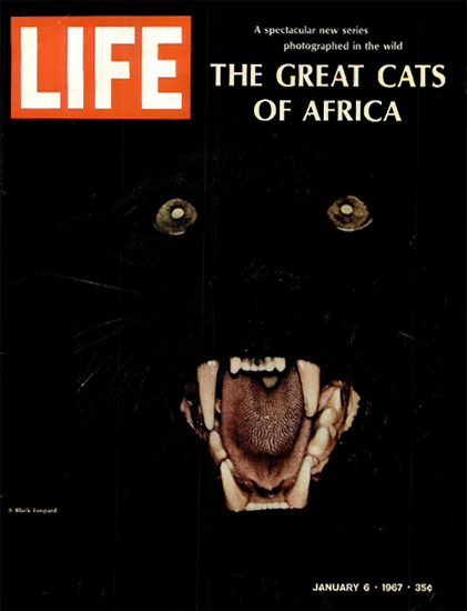 Black Leopard Great Cats of Africa 6 Jan 1967 Copyright Life Magazine | Life Magazine Color Photo Covers 1937-1970