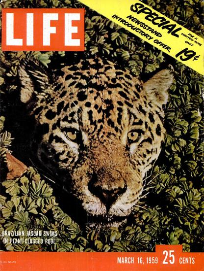 Brazilian Jaguar Swimming16 Mar 1959 Copyright Life Magazine | Life Magazine Color Photo Covers 1937-1970
