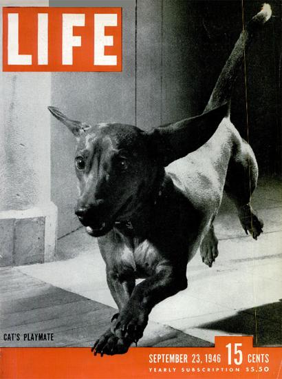 Cats Playmate 23 Sep 1946 Copyright Life Magazine | Life Magazine BW Photo Covers 1936-1970