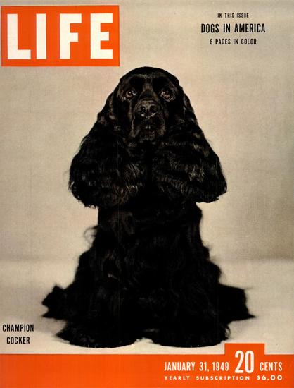 Champion Cocker 31 Jan 1949 Copyright Life Magazine | Life Magazine Color Photo Covers 1937-1970