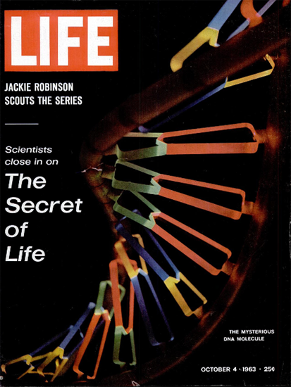 DNA Molecule Secret of Life Science 4 Oct 1963 Copyright Life Magazine | Life Magazine Color Photo Covers 1937-1970