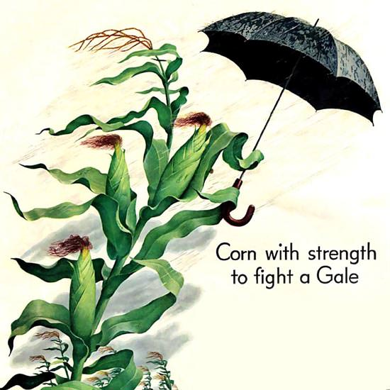 Detail Of Shell Corn With Strength To Fight A Gale 1952 | Best of Vintage Ad Art 1891-1970