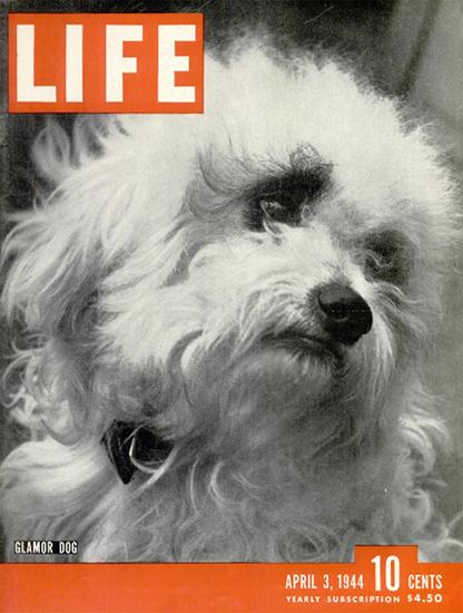 Glamor Dog 3 Apr 1944 Copyright Life Magazine | Life Magazine BW Photo Covers 1936-1970
