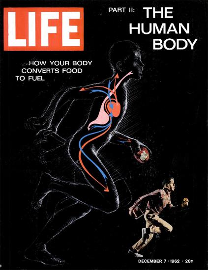 Human Body Cardiovascular System 7 Dec 1962 Copyright Life Magazine | Life Magazine Color Photo Covers 1937-1970