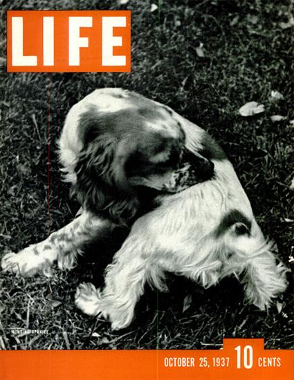 Hunting Spaniel 25 Oct 1937 Copyright Life Magazine | Life Magazine BW Photo Covers 1936-1970
