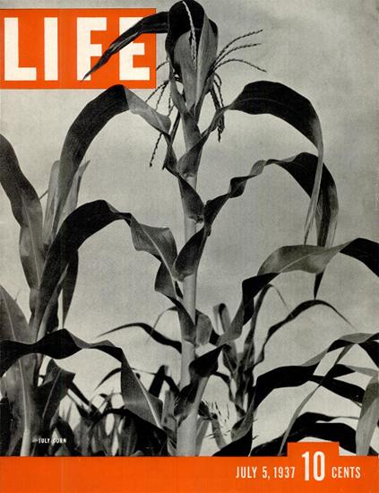 July Corn 5 Jul 1937 Copyright Life Magazine | Life Magazine BW Photo Covers 1936-1970