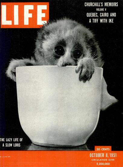 Lazy Life of a Slow Loris 8 Oct 1951 Copyright Life Magazine | Life Magazine BW Photo Covers 1936-1970