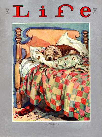 Life Magazine Copyright 1930 Little Dog Sleeping On Bed | Vintage Ad and Cover Art 1891-1970