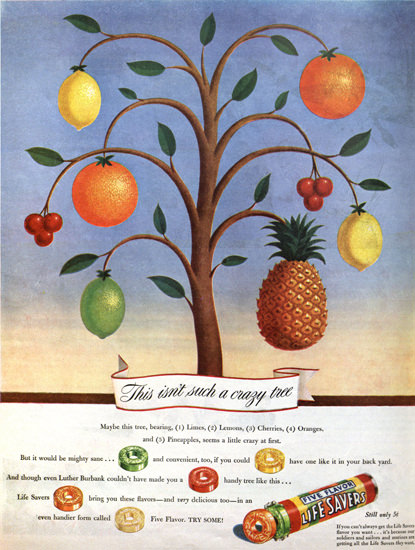 Life Savers Candy Crazy Tree | Vintage Ad and Cover Art 1891-1970