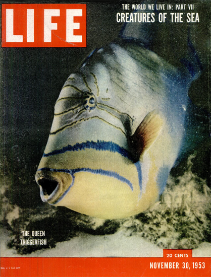 Queen Triggerfish 30 Nov 1953 Copyright Life Magazine | Life Magazine Color Photo Covers 1937-1970