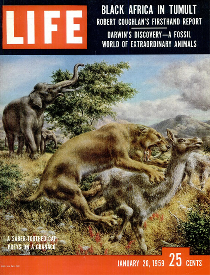 Saber-Toothed Cat preys Guanaco 26 Jan 1959 Copyright Life Magazine | Life Magazine Color Photo Covers 1937-1970