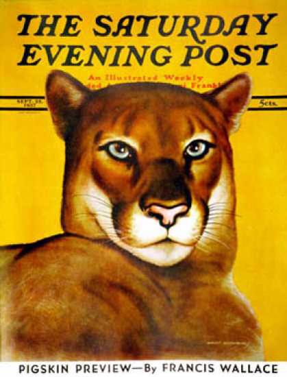 Saturday Evening Post Copyright 1937 Mountain Lion | Vintage Ad and Cover Art 1891-1970