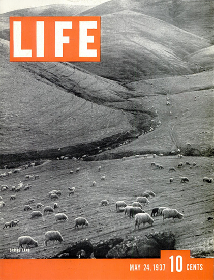 Spring Lamb 24 May 1937 Copyright Life Magazine | Life Magazine BW Photo Covers 1936-1970