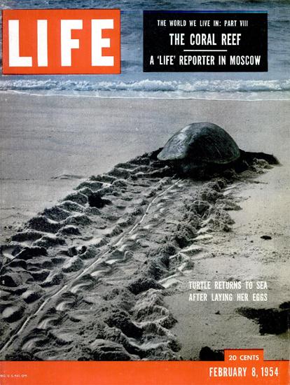 Turtle returns to Sea 8 Feb 1954 Copyright Life Magazine | Life Magazine Color Photo Covers 1937-1970
